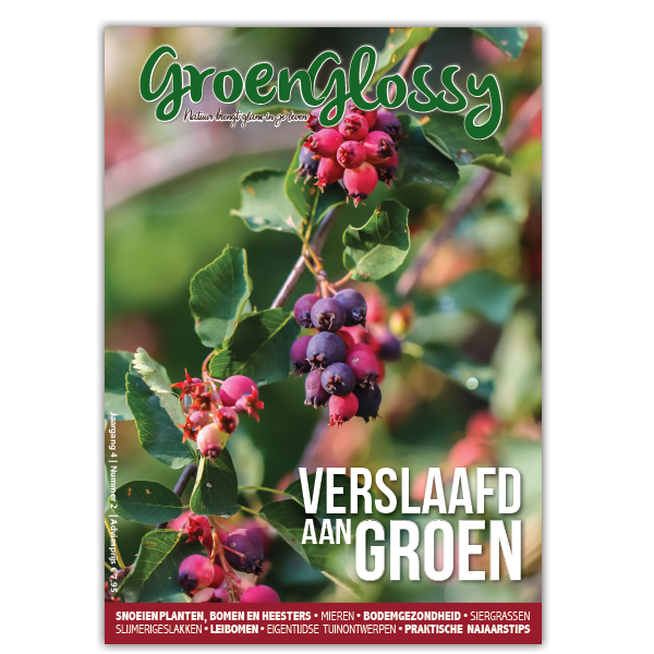 GroenGlossy_lepona_najaar_2020